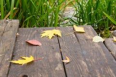 Bugia delle foglie di giallo sul ponte Fotografia Stock