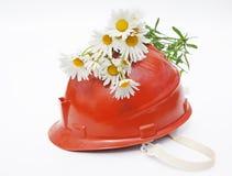Bugia di Camomiles su un casco per minatore Fotografia Stock