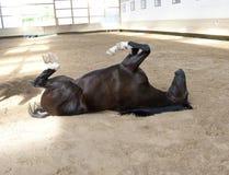Bugia divertente del cavallo sulla parte posteriore Immagine Stock Libera da Diritti