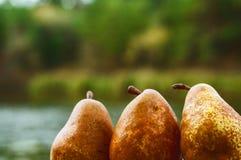 Bugia fresca della pera su una tavola di legno Fotografie Stock Libere da Diritti