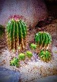 Bugia voi giù in un letto del cactus immagine stock libera da diritti