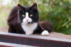 Bugie e sguardi fissi del gatto nero nella lente Immagini Stock