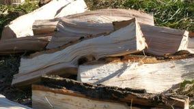 Bugie tagliate della legna da ardere su una terra archivi video