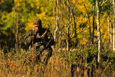 bugling bowhunter łoś Fotografia Royalty Free