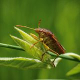 Bugman Стоковое Фото