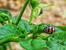 bugs жизнь Стоковое Изображение