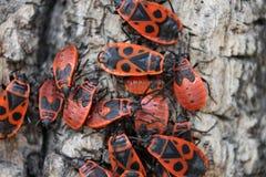 bugs красный цвет стоковые фото