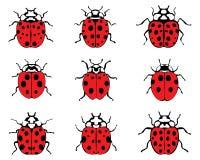 bugs повелительница Стоковое Фото