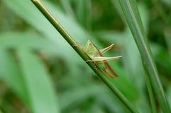 bugs природа Стоковое Изображение RF