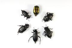 Bugs. Black bugs isolated on white Stock Photography