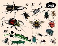 Bugs. Bugs isolated on light background. Additional  format Illustrator 8 eps Royalty Free Stock Photo