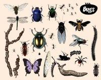 Bugs. Bugs isolated on light background. Additional  format Illustrator 8 eps Royalty Free Stock Photos