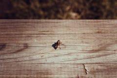 bugs imagen de archivo