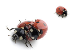Bugs Stock Images
