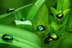 Bugs. A fresh compilation of different episodes of a bug's life Royalty Free Stock Photo