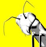 Bugs 7 Royalty Free Stock Image