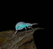 bugs foto de archivo
