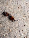 bugs fotografía de archivo
