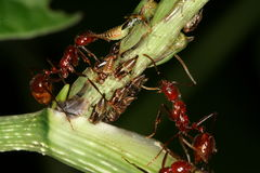 Bugs and ants Royalty Free Stock Photography