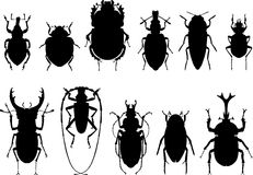 Bugs, black silhouettes on white background.  Royalty Free Stock Image