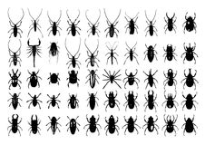 Bugs Collection. Vector Bugs Collection with white background Stock Photo