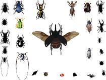 Bugs collection isolated on white Stock Photo