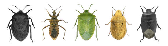 Bugs collection. Isolated on a white backround Royalty Free Stock Photos