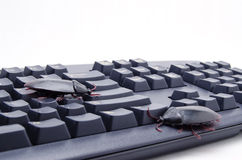 Bugs on a Computer Keyboard Stock Photos