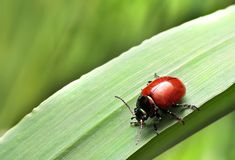 Bugs crawling on the grass shoots Royalty Free Stock Images