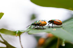 Bugs crawling on leaf Stock Images