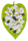 Bugs and daisies Royalty Free Stock Image