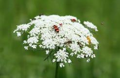 Bugs Dancefloor Stock Photo