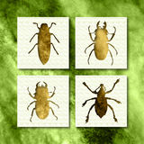 Bugs. 4 different type of bugs Royalty Free Stock Images