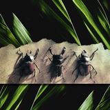 Bugs. 3 different type of bugs Royalty Free Stock Photo