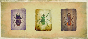Bugs. 3 different type of bugs  on grungy background Royalty Free Stock Images