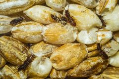 Beetles and food Stock Photos