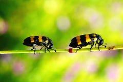 bugs färgrikt Arkivfoto