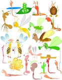 Bugs insect beetles worm Royalty Free Stock Images