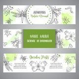 Bugs insects hand drawn banner. Pest control concept. Entomology poster Cartoon illustration of pests and bug. Vector. Bugs insects hand drawn banner. Pest Royalty Free Stock Images