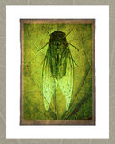 Bugs. Isolated on grungy background Royalty Free Stock Photography