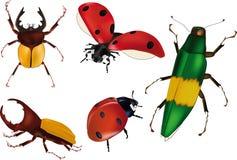 bugs krypnyckelpigor Arkivfoton