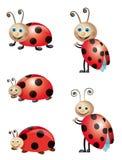 bugs ladyen Arkivfoto