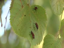 Bugs on a leaves stock footage
