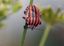 Bugs life Stock Image