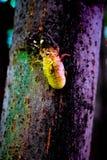 Bugs life Stock Photo