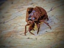 A bugs life royalty free stock photos