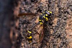 bugs livstid Royaltyfri Bild