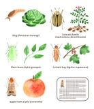 Bugs set Stock Image