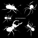 Bugs silhouettes Stock Photography