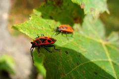 Bugs Royalty Free Stock Photography